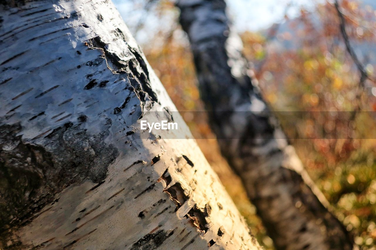 tree trunk, tree, day, textured, wood - material, rough, nature, close-up, outdoors, focus on foreground, bark, tree stump, no people, forest