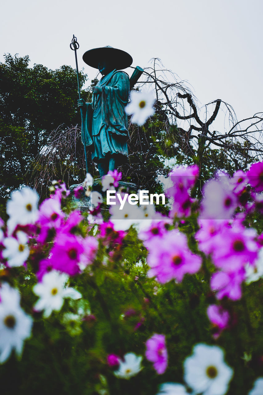 plant, flower, flowering plant, growth, nature, sky, day, freshness, tree, fragility, human representation, beauty in nature, representation, selective focus, low angle view, vulnerability, no people, outdoors, male likeness, art and craft, purple