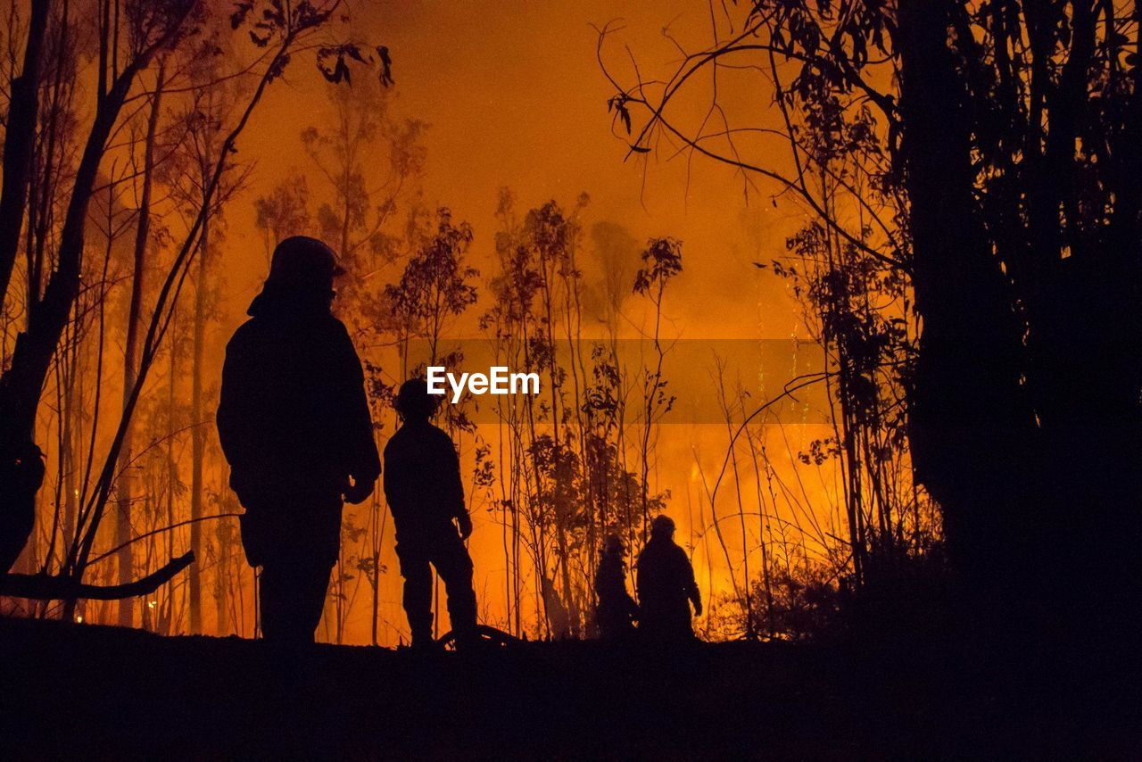 Low Angle View Of Silhouette Firefighters And Trees During Forest Fire