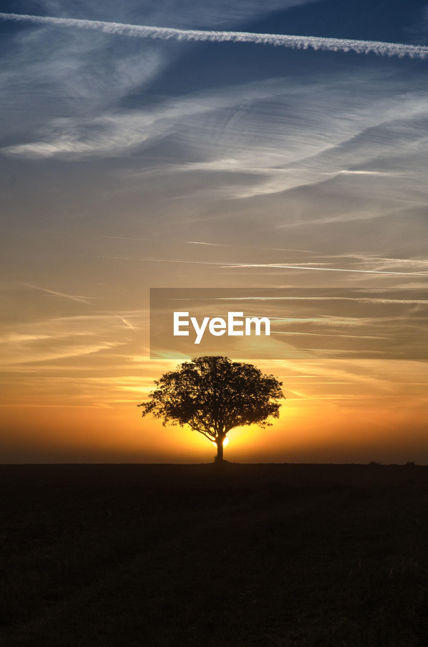 SILHOUETTE TREE ON LANDSCAPE AGAINST SUNSET