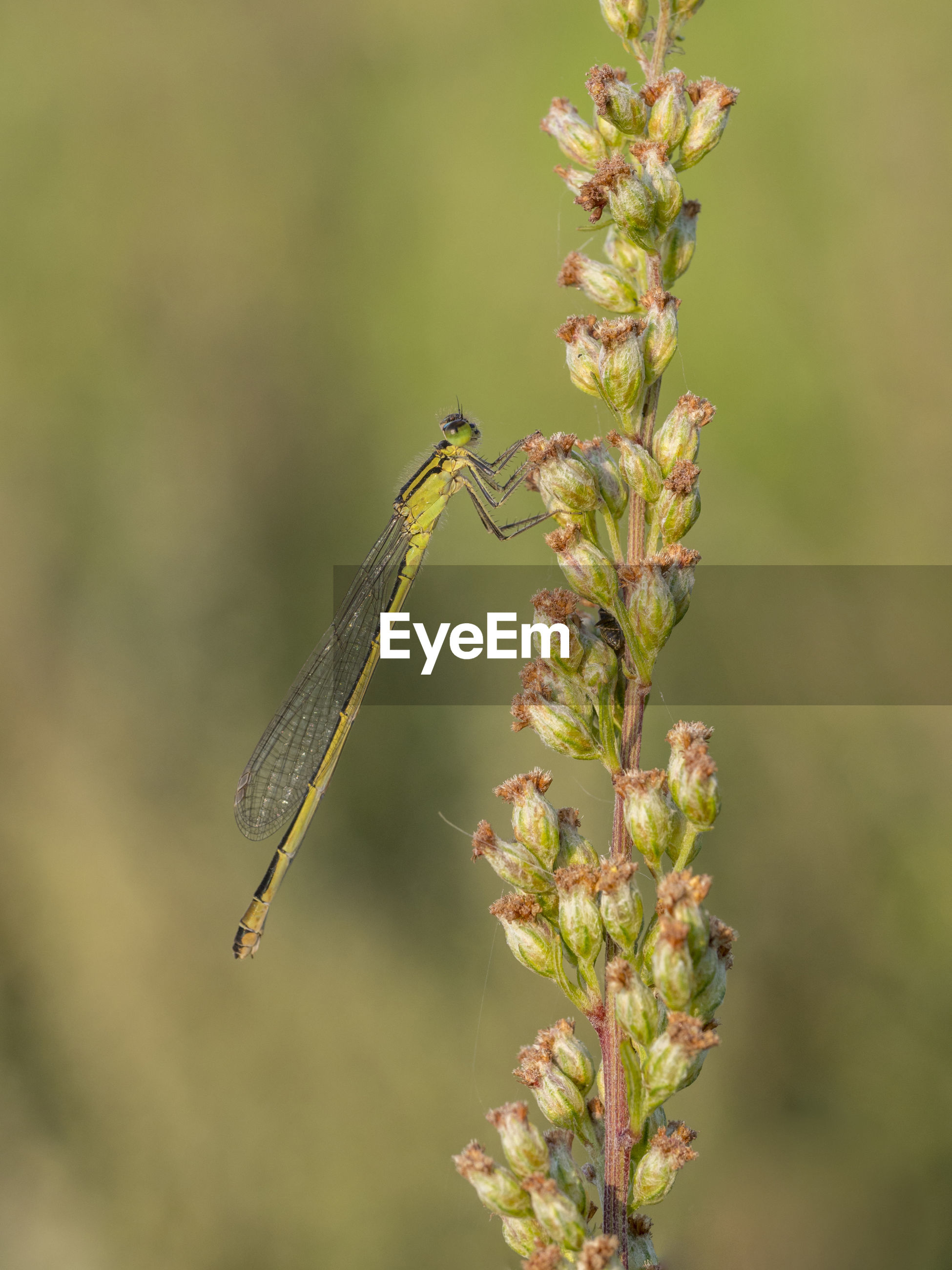 CLOSE-UP OF INSECT ON PLANT OUTDOORS
