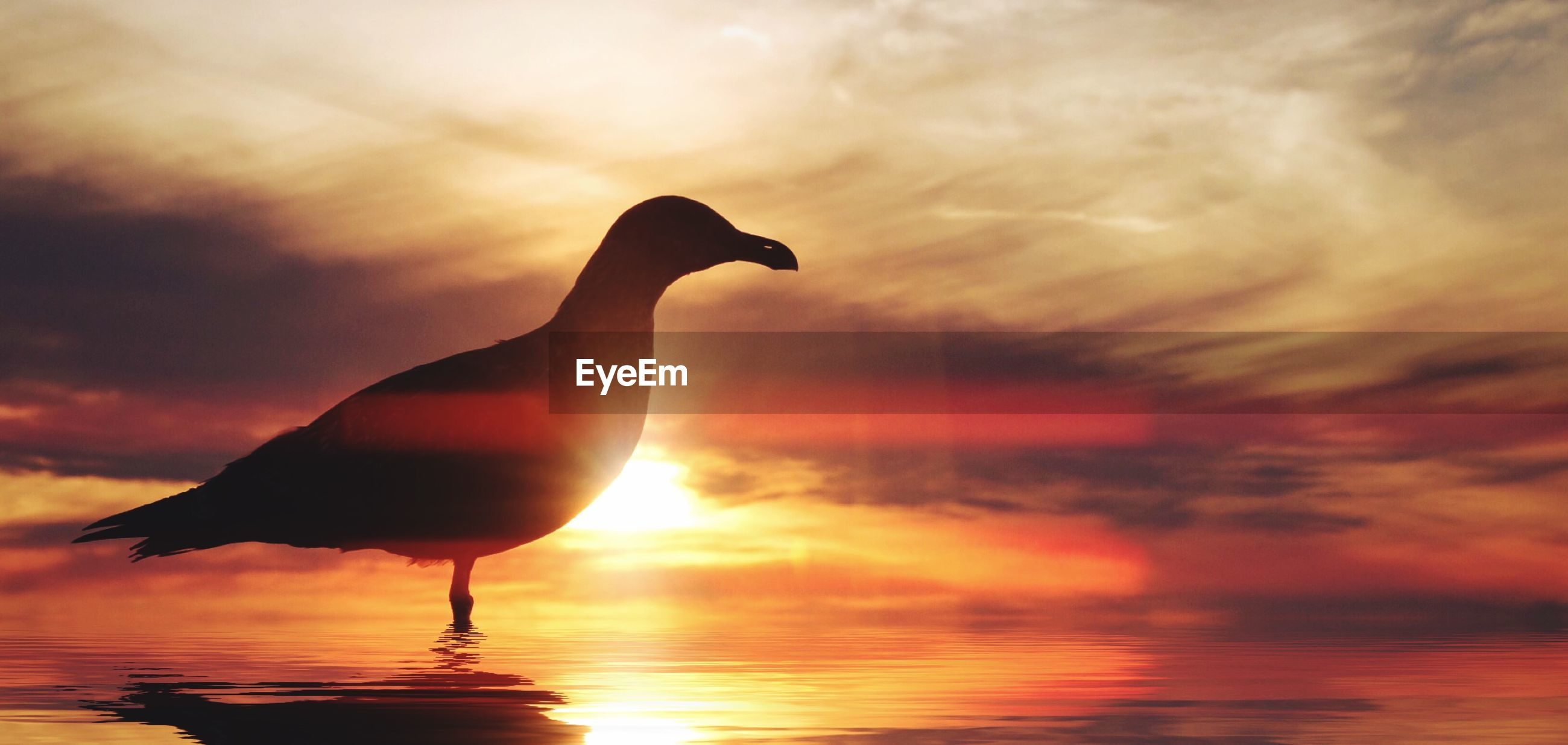 Digital composite image of silhouette seagull in water against sky at sunset