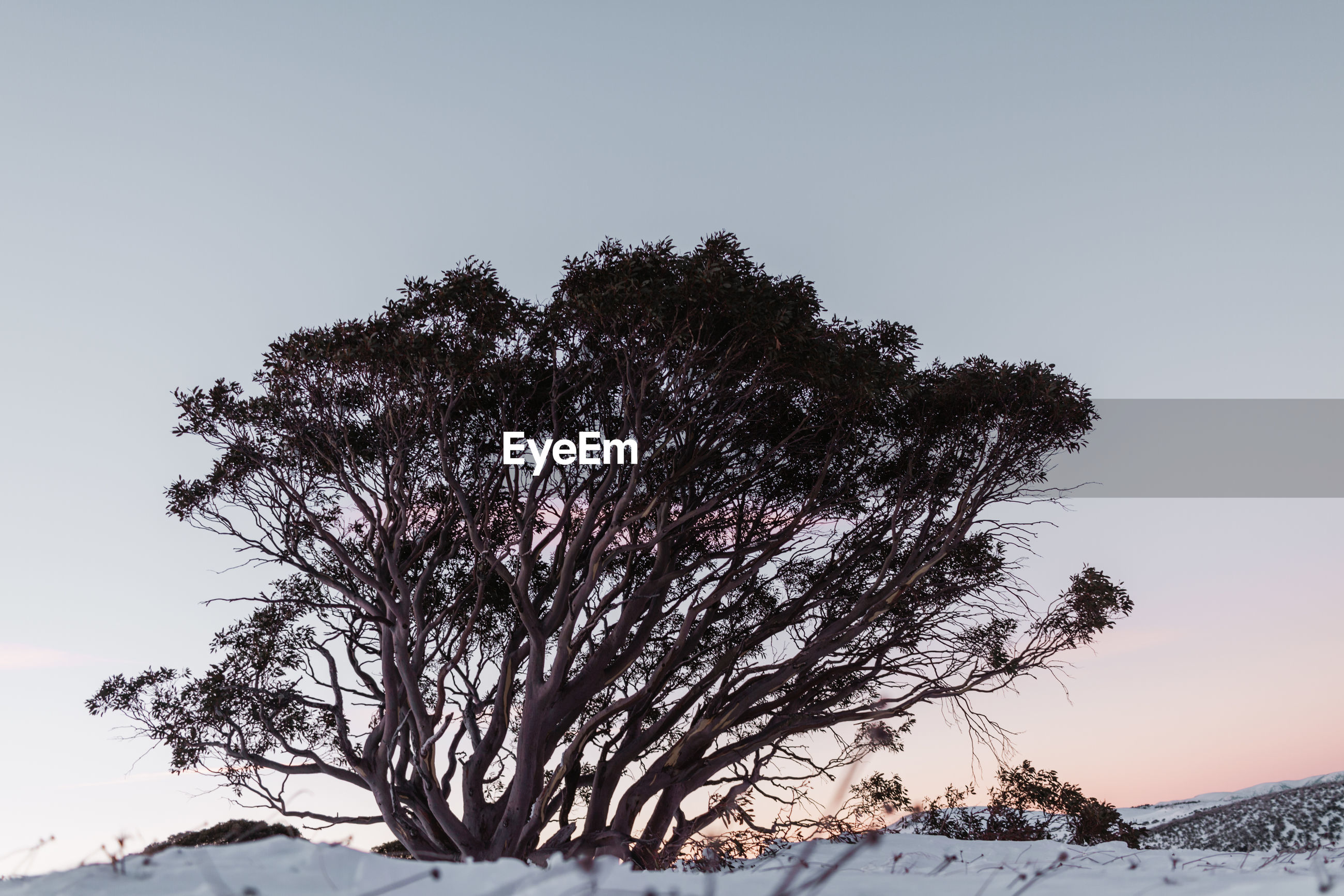 TREE AGAINST SKY DURING WINTER