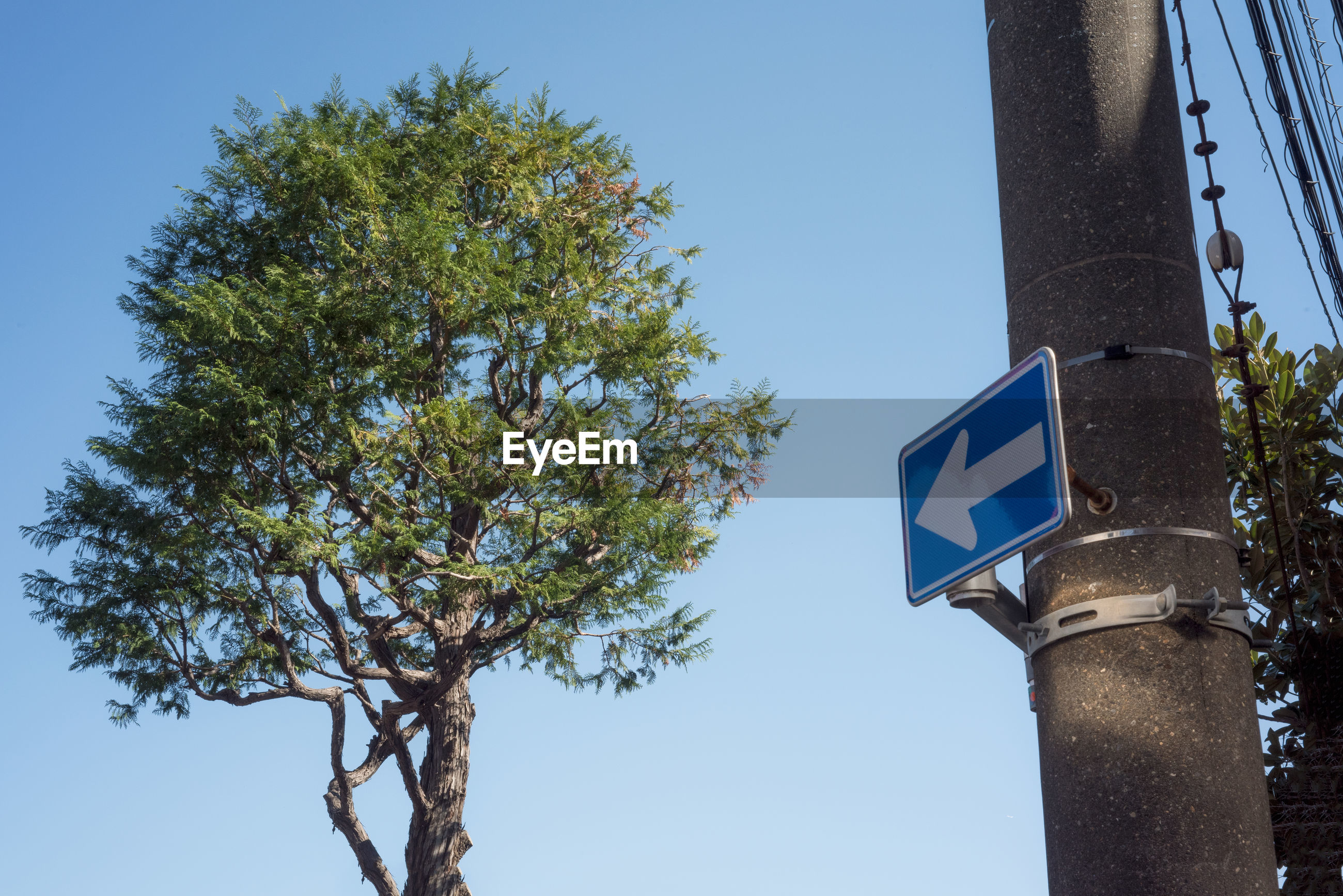 Low angle view of road sign against sky and a tree