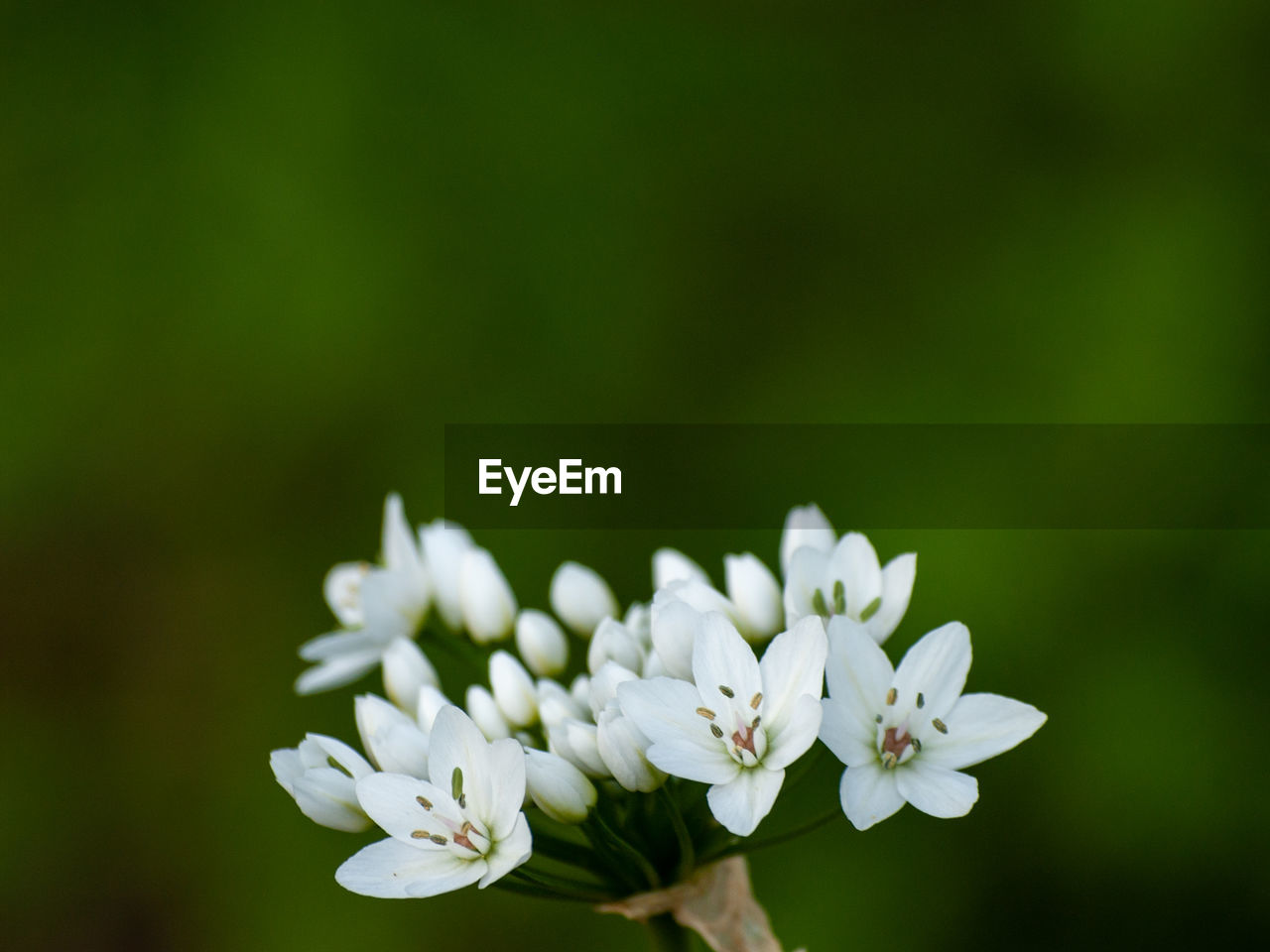 flower, flowering plant, vulnerability, fragility, plant, beauty in nature, freshness, close-up, petal, white color, growth, inflorescence, flower head, nature, no people, focus on foreground, day, selective focus, outdoors, botany