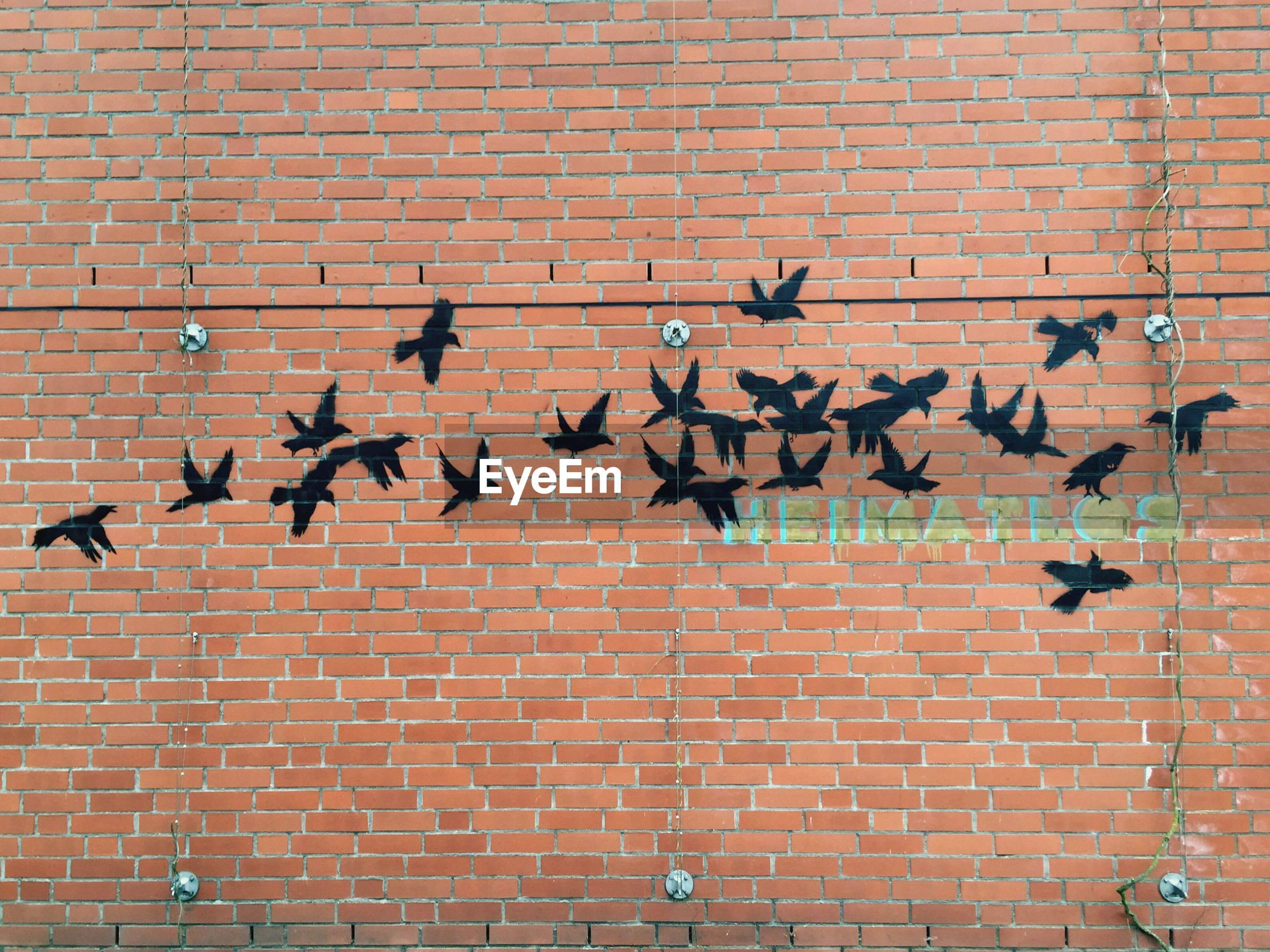 brick wall, bird, built structure, architecture, building exterior, wall - building feature, animal themes, full frame, wildlife, animals in the wild, backgrounds, brick, pattern, outdoors, flock of birds, day, red, pigeon, wall