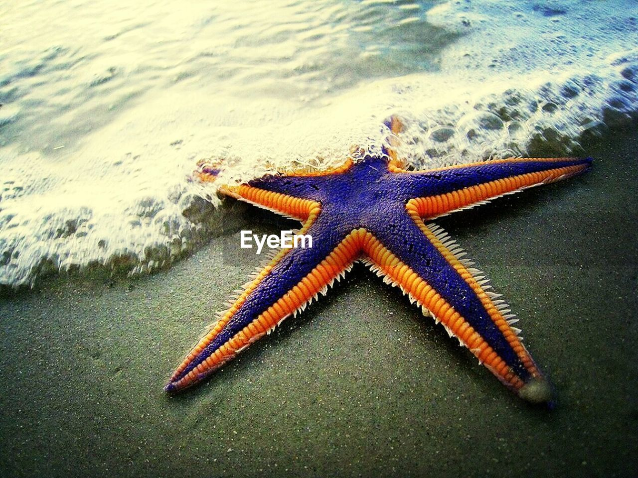 Close-up of starfish on shore