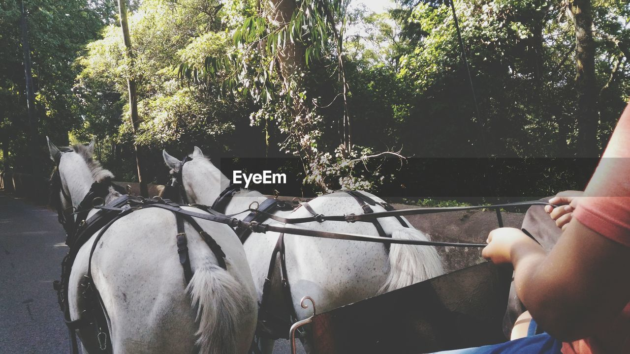 Cropped image of man in horse cart