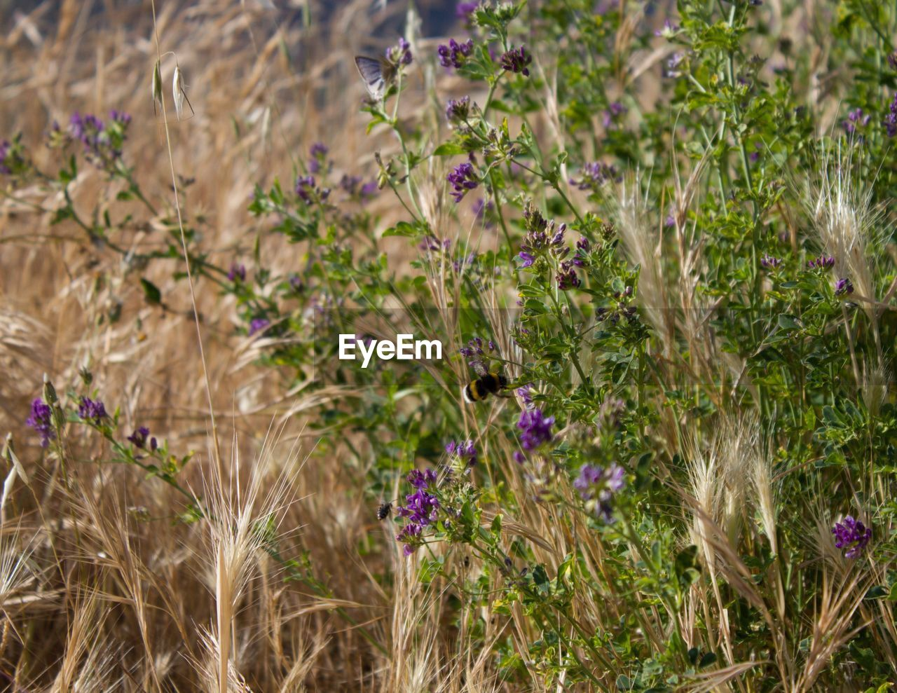 plant, growth, flowering plant, flower, nature, beauty in nature, freshness, day, field, fragility, close-up, no people, land, vulnerability, outdoors, selective focus, tranquility, focus on foreground, plant part, leaf, purple