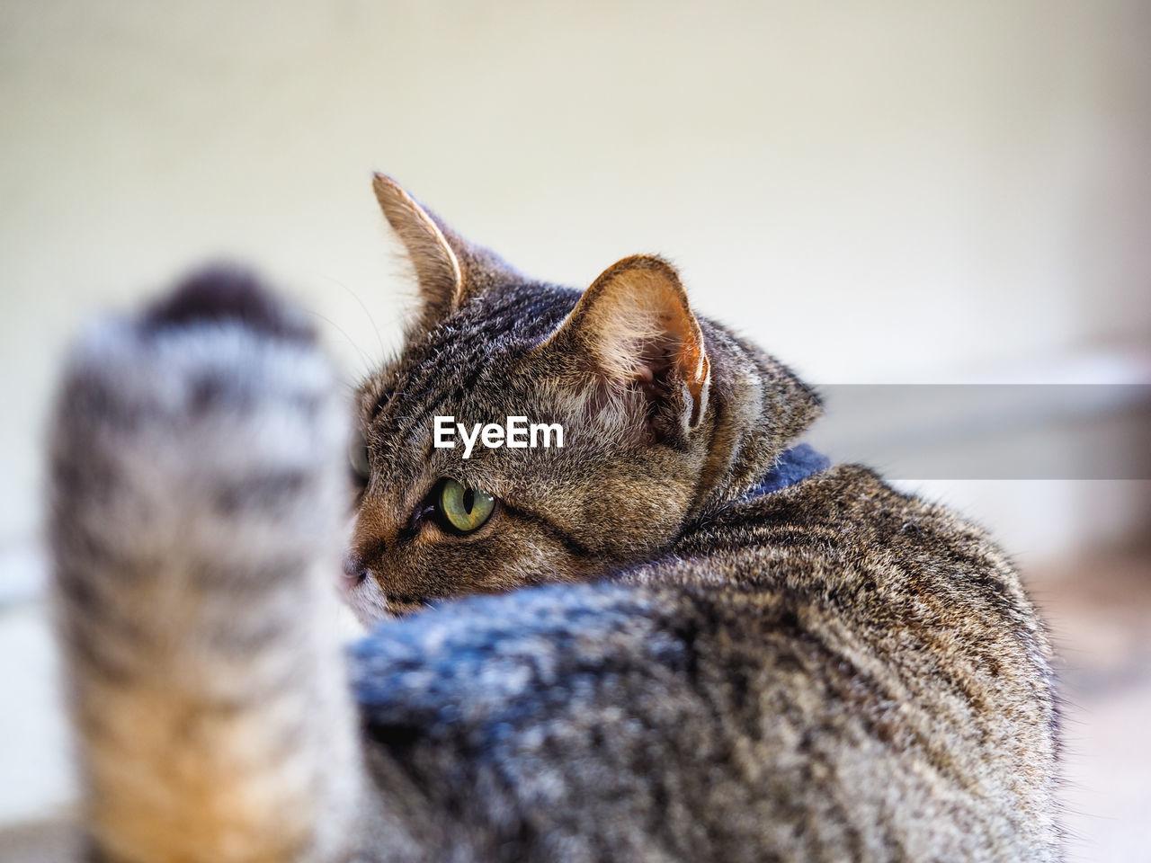 Close-Up Of Cat Indoors