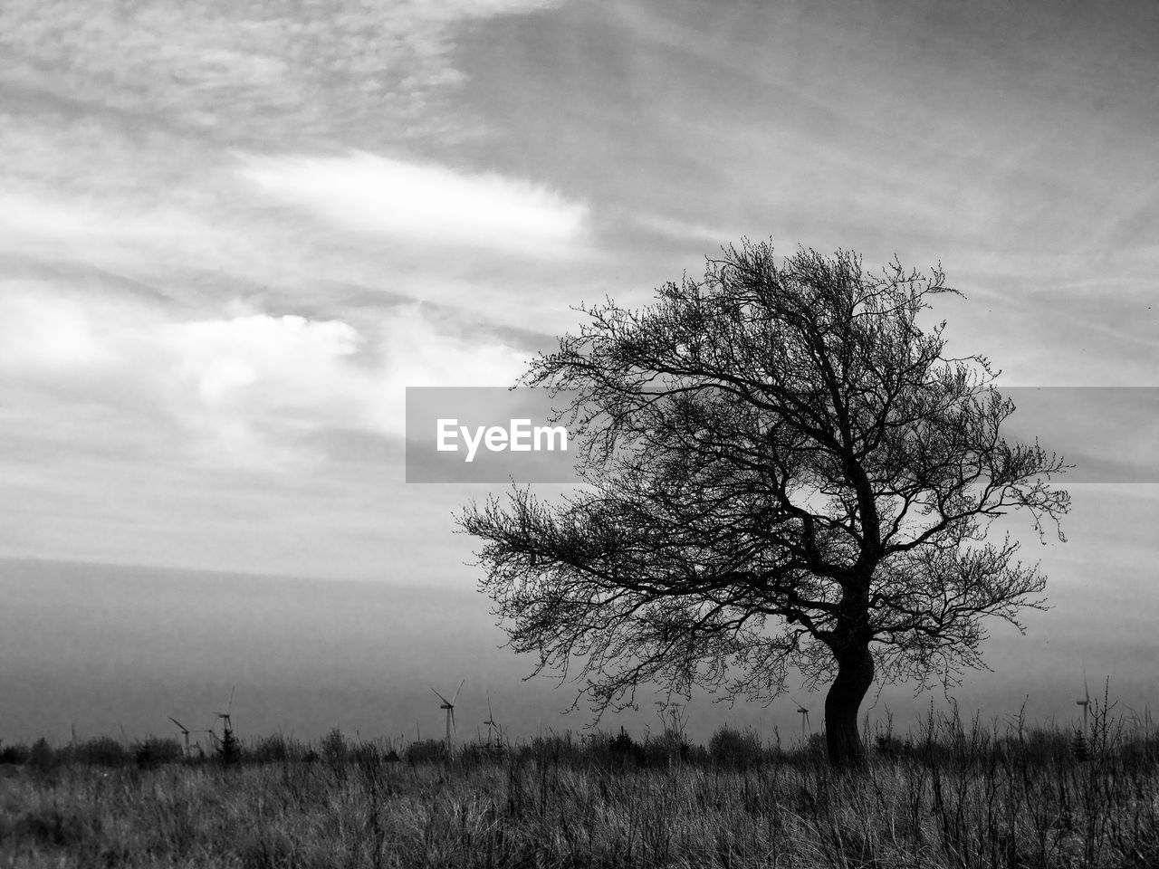 tree, field, plant, tranquility, environment, sky, beauty in nature, land, landscape, tranquil scene, bare tree, cloud - sky, scenics - nature, nature, non-urban scene, no people, solitude, horizon, horizon over land, grass, outdoors, isolated