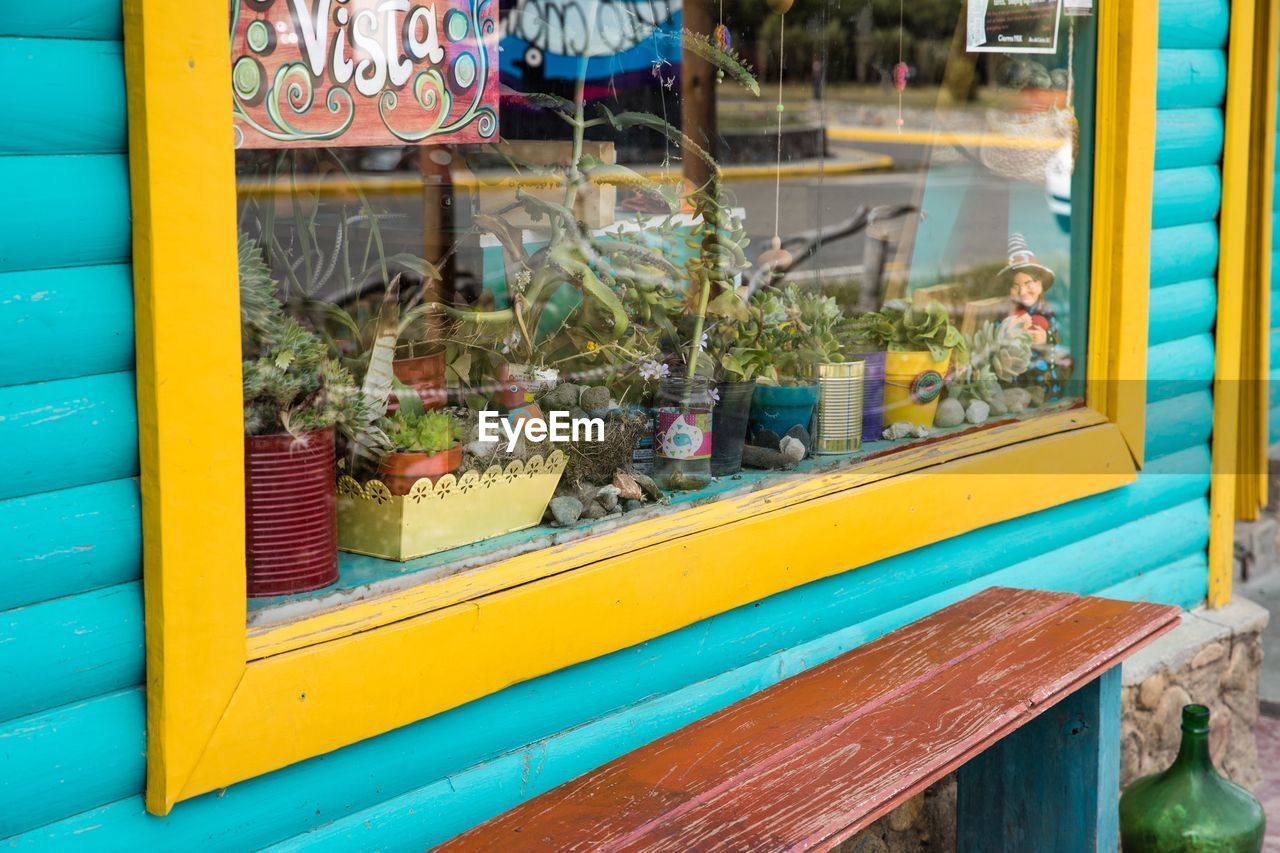 yellow, day, no people, outdoors, focus on foreground, transparent, window, nature, animal, glass - material, multi colored, close-up, retail, animal themes, representation, animal representation, animal wildlife, plant, small business