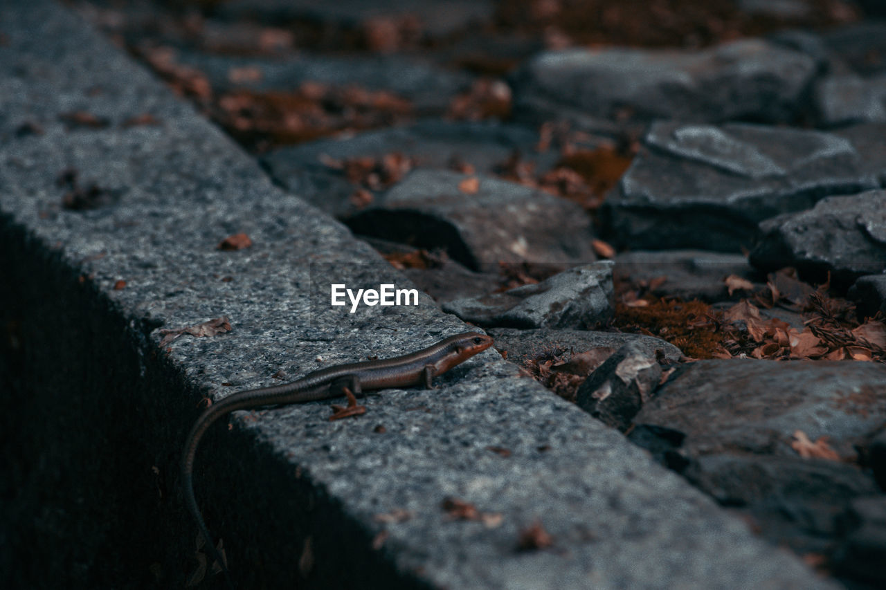 selective focus, solid, no people, nature, close-up, day, outdoors, rock, textured, plant part, rock - object, leaf, high angle view, rough, one animal, street, sign, road, animal, focus on foreground