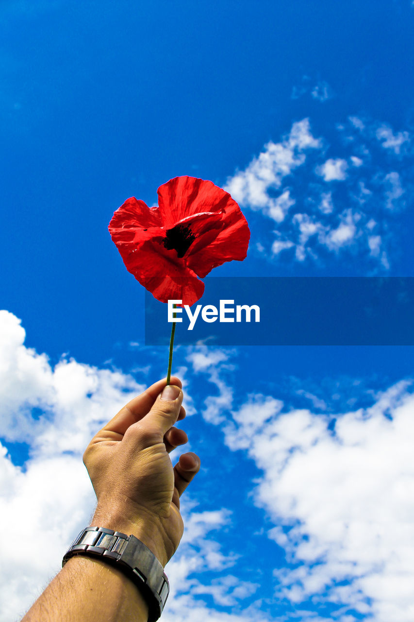 Cropped Image Of Man Hand Holding Red Poppy Against Sky