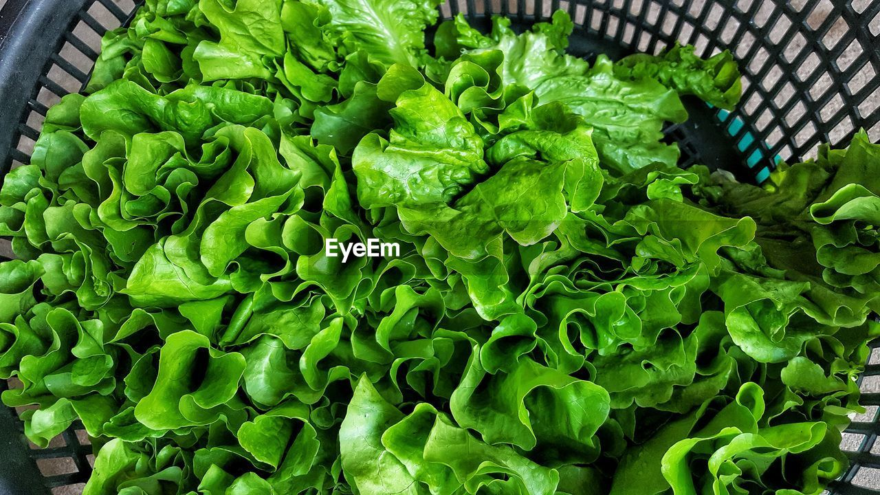 green color, vegetable, food and drink, freshness, food, wellbeing, healthy eating, plant part, no people, leaf, close-up, lettuce, day, container, high angle view, green, leaf vegetable, large group of objects, growth, nature, vegetarian food, leaves