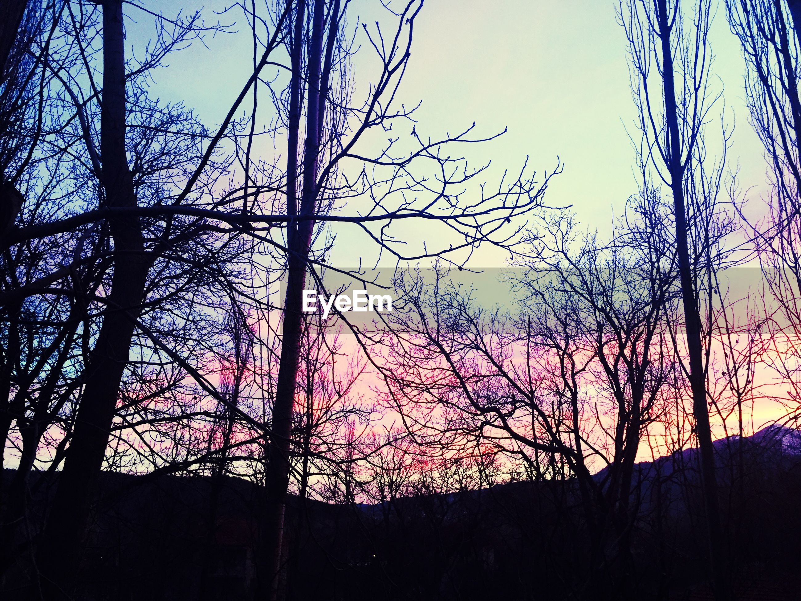 silhouette, tree, sunset, bare tree, beauty in nature, branch, tranquility, nature, low angle view, sky, scenics, tranquil scene, blue, clear sky, growth, dusk, idyllic, outdoors, no people, tree trunk