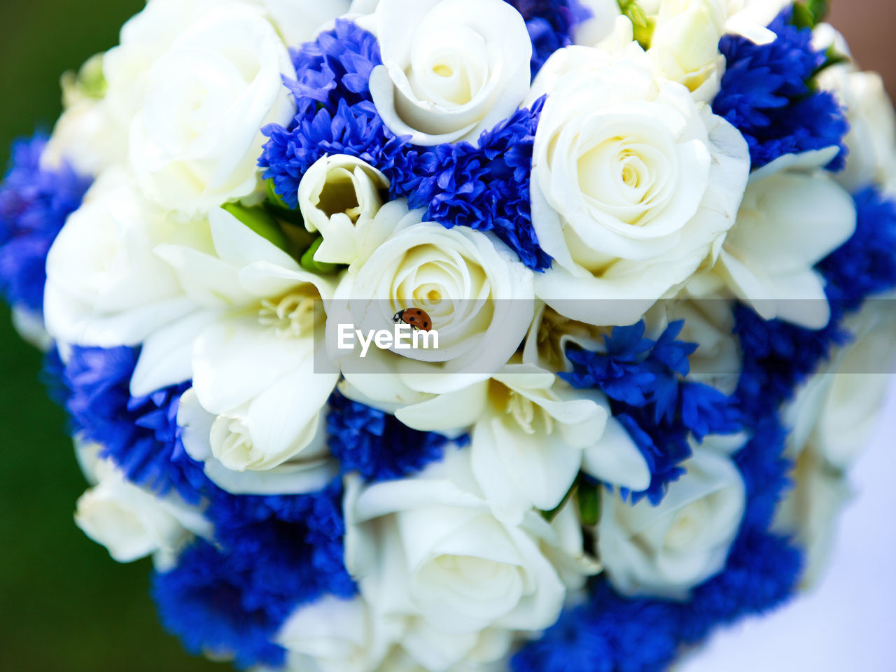 flower, wedding, bouquet, beauty in nature, rose - flower, petal, flower head, blue, fragility, white color, freshness, celebration, purple, close-up, bride, hyacinth, nature, indoors, life events, wedding dress, day