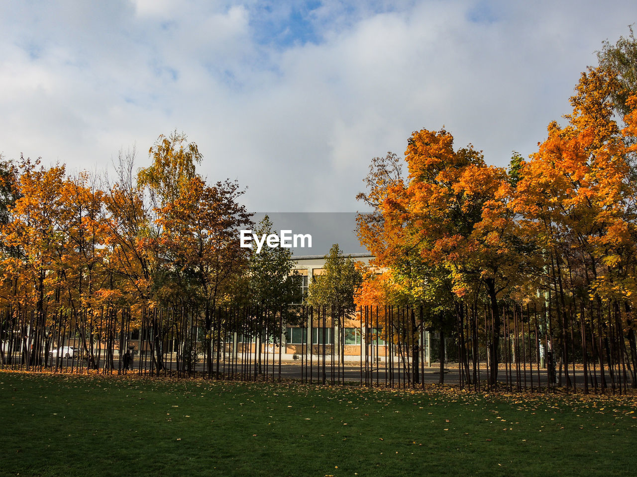 tree, autumn, nature, no people, sky, beauty in nature, change, outdoors, tranquility, grass, growth, scenics, day