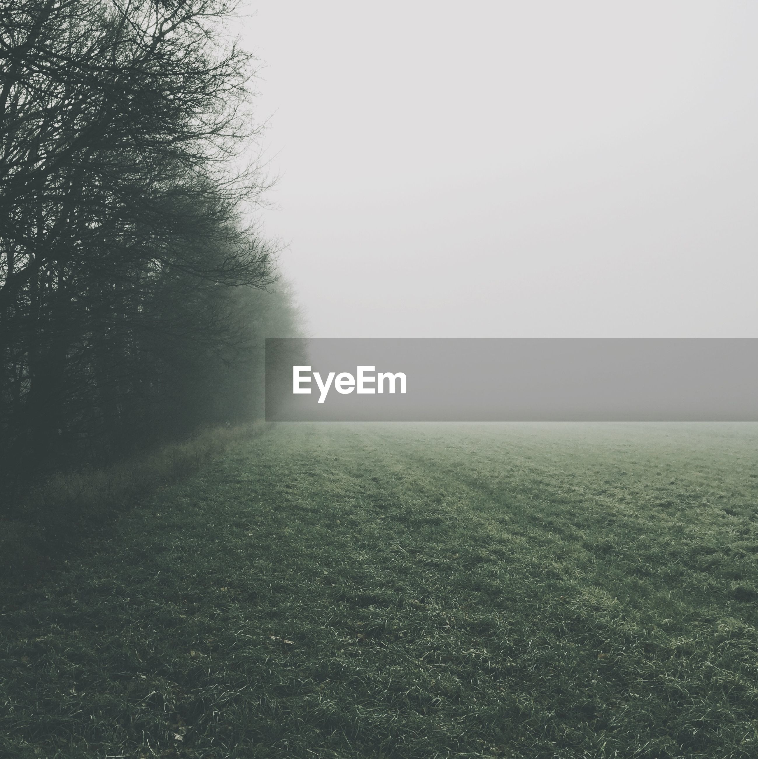 Trees and grassy field in foggy weather