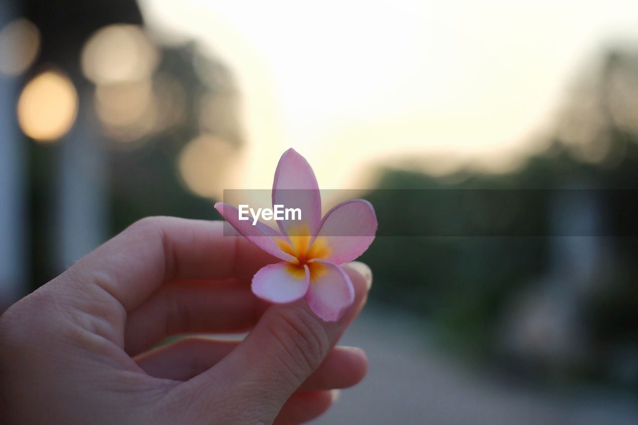 hand, human hand, holding, one person, flower, flowering plant, human body part, focus on foreground, close-up, vulnerability, fragility, freshness, petal, plant, beauty in nature, real people, nature, finger, human finger, sunset, body part, flower head, outdoors