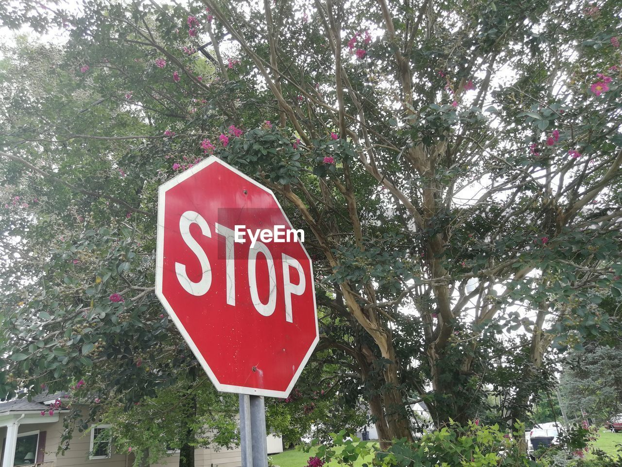 tree, plant, communication, sign, text, stop sign, road sign, western script, day, red, nature, road, capital letter, warning sign, information, growth, guidance, no people, stop - single word, city, outdoors, message