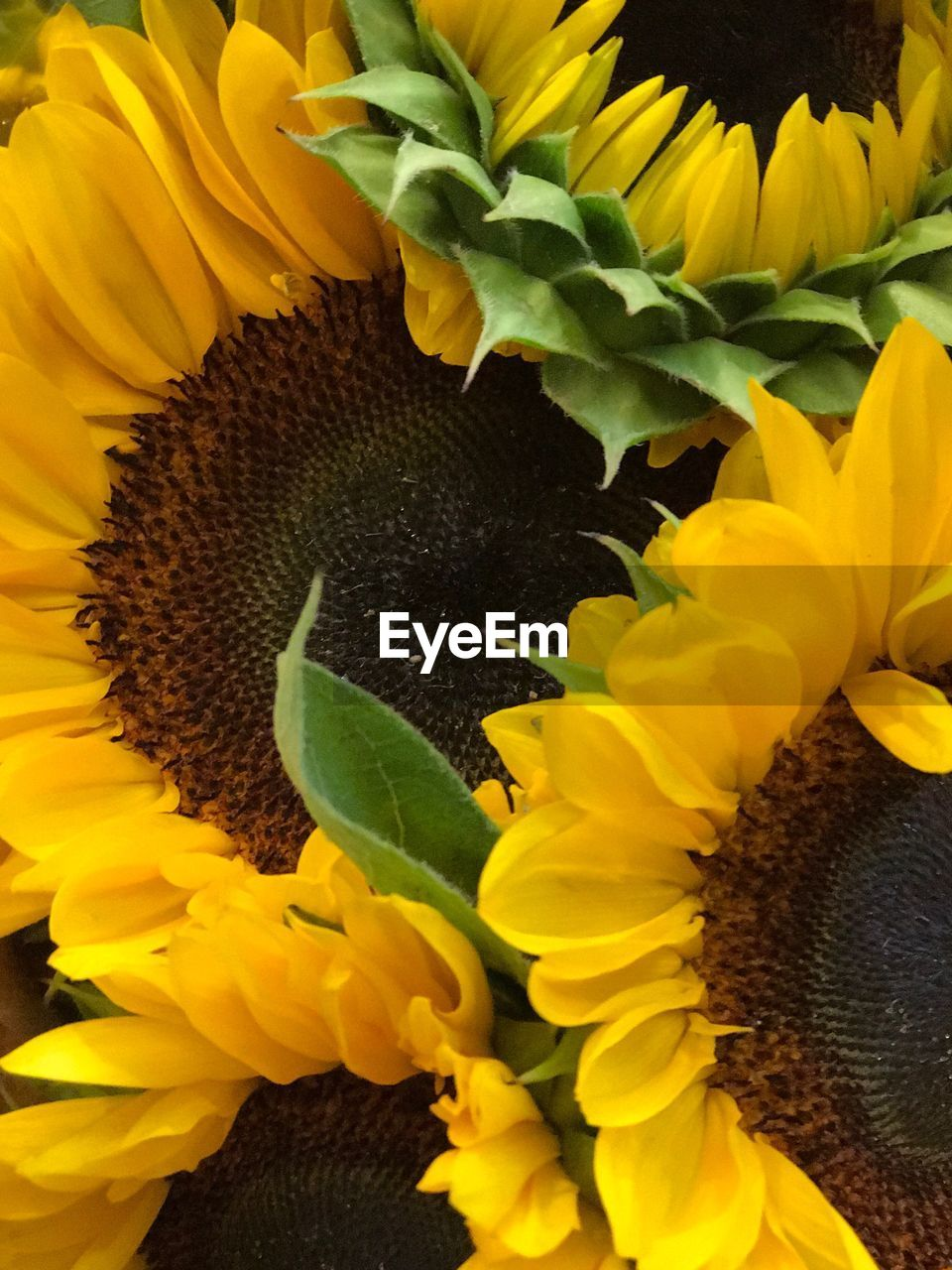 flower, yellow, petal, sunflower, fragility, beauty in nature, nature, flower head, freshness, growth, plant, no people, close-up, leaf, outdoors, blooming, day