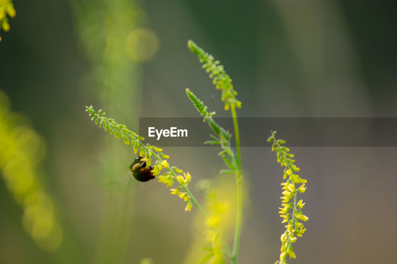 plant, growth, insect, invertebrate, flower, flowering plant, beauty in nature, animals in the wild, animal wildlife, animal themes, fragility, one animal, animal, vulnerability, green color, close-up, day, nature, freshness, bee, no people, pollination, outdoors, flower head