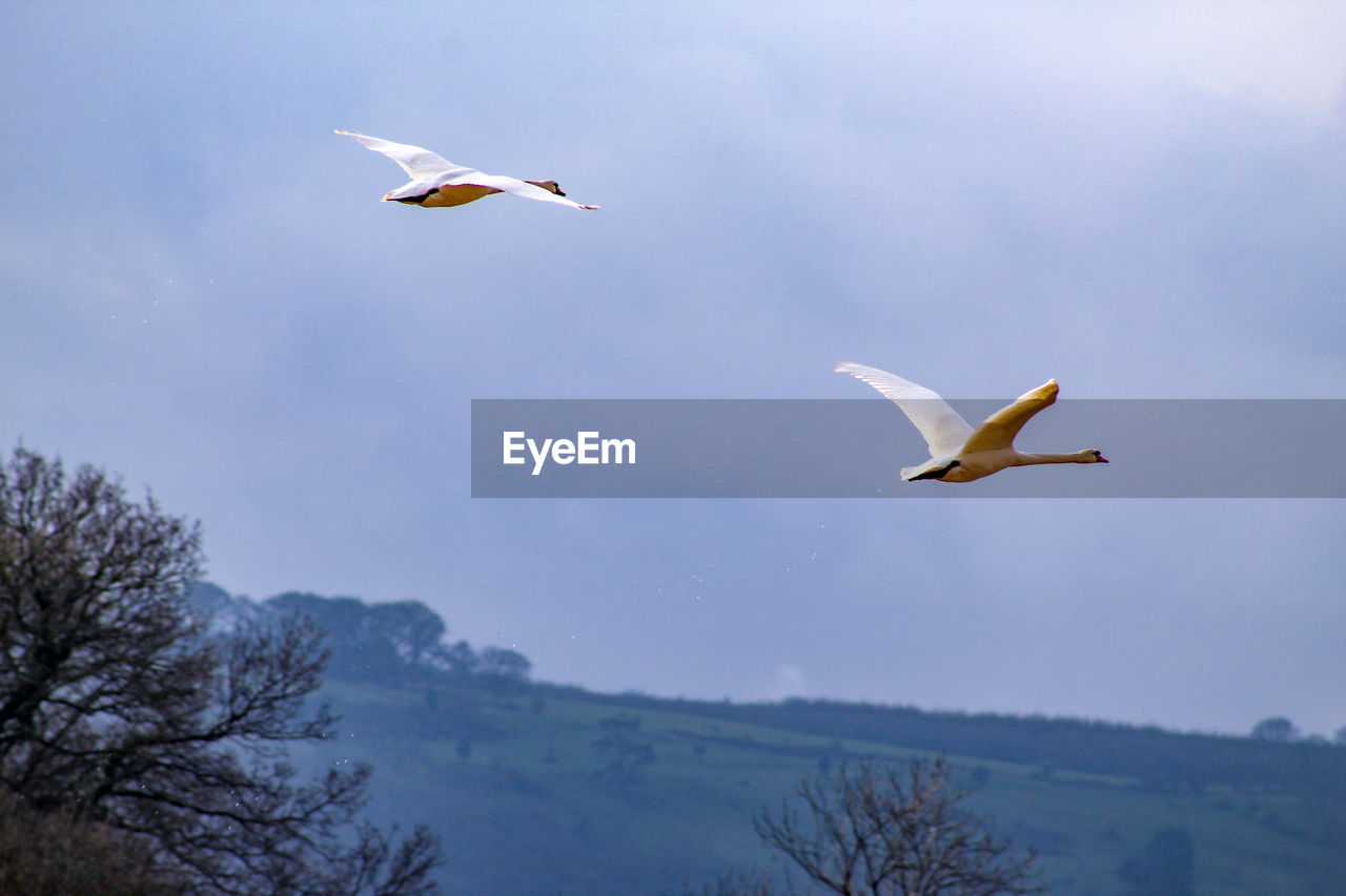 flying, animals in the wild, animal themes, animal wildlife, animal, vertebrate, bird, spread wings, group of animals, sky, mid-air, no people, low angle view, nature, two animals, beauty in nature, day, seagull, tree