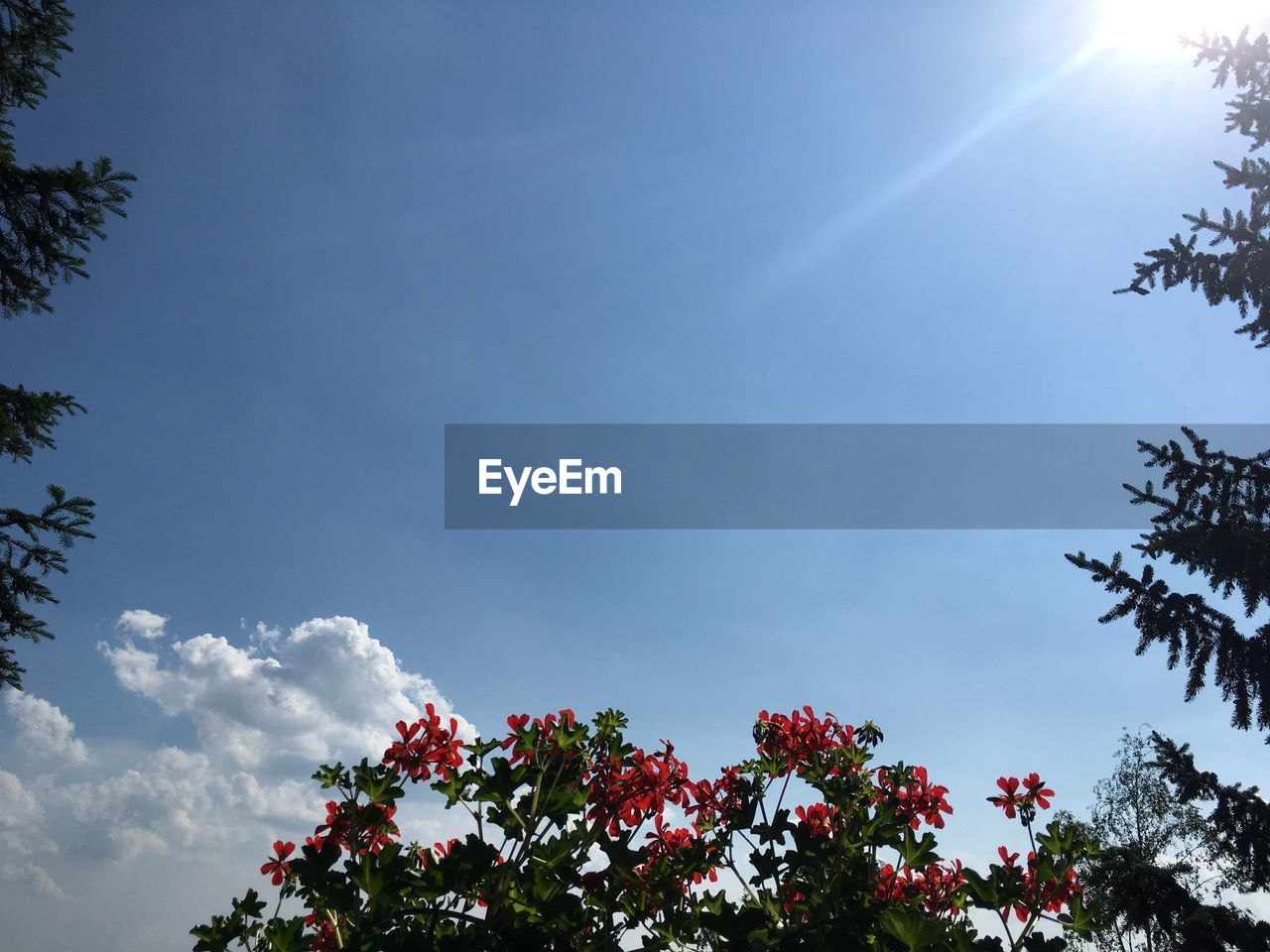 plant, sky, tree, beauty in nature, cloud - sky, low angle view, growth, nature, no people, day, tranquility, outdoors, sunlight, scenics - nature, branch, flowering plant, tranquil scene, blue, flower, treetop