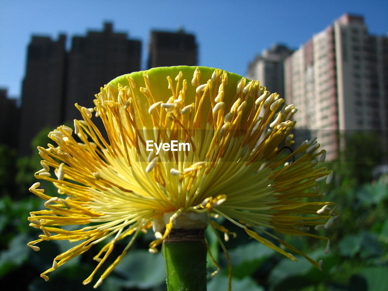 flower, fragility, growth, nature, freshness, plant, petal, focus on foreground, beauty in nature, no people, yellow, outdoors, close-up, flower head, blooming, day, architecture
