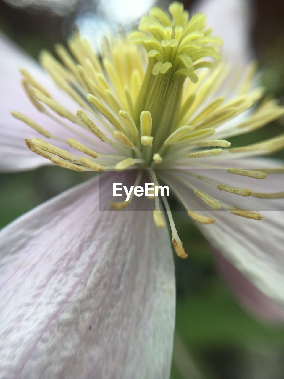 flowering plant, flower, vulnerability, fragility, plant, close-up, freshness, beauty in nature, growth, petal, inflorescence, flower head, focus on foreground, no people, nature, day, pollen, selective focus, white color, sepal