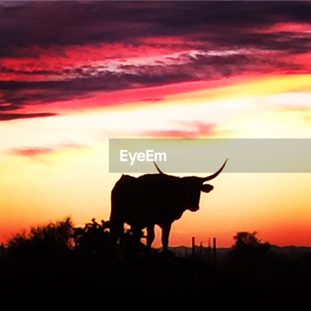 silhouette, sunset, one animal, animal themes, sky, nature, no people, standing, outdoors, mammal