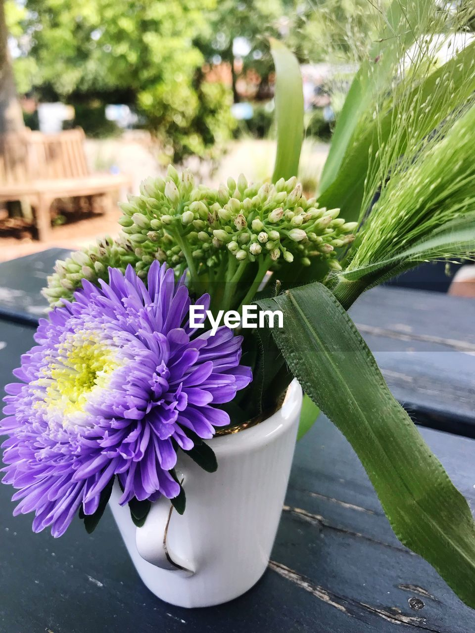 flower, flowering plant, plant, freshness, close-up, beauty in nature, vulnerability, growth, focus on foreground, fragility, nature, inflorescence, flower head, petal, day, green color, potted plant, no people, leaf, plant part, purple, outdoors, flower pot
