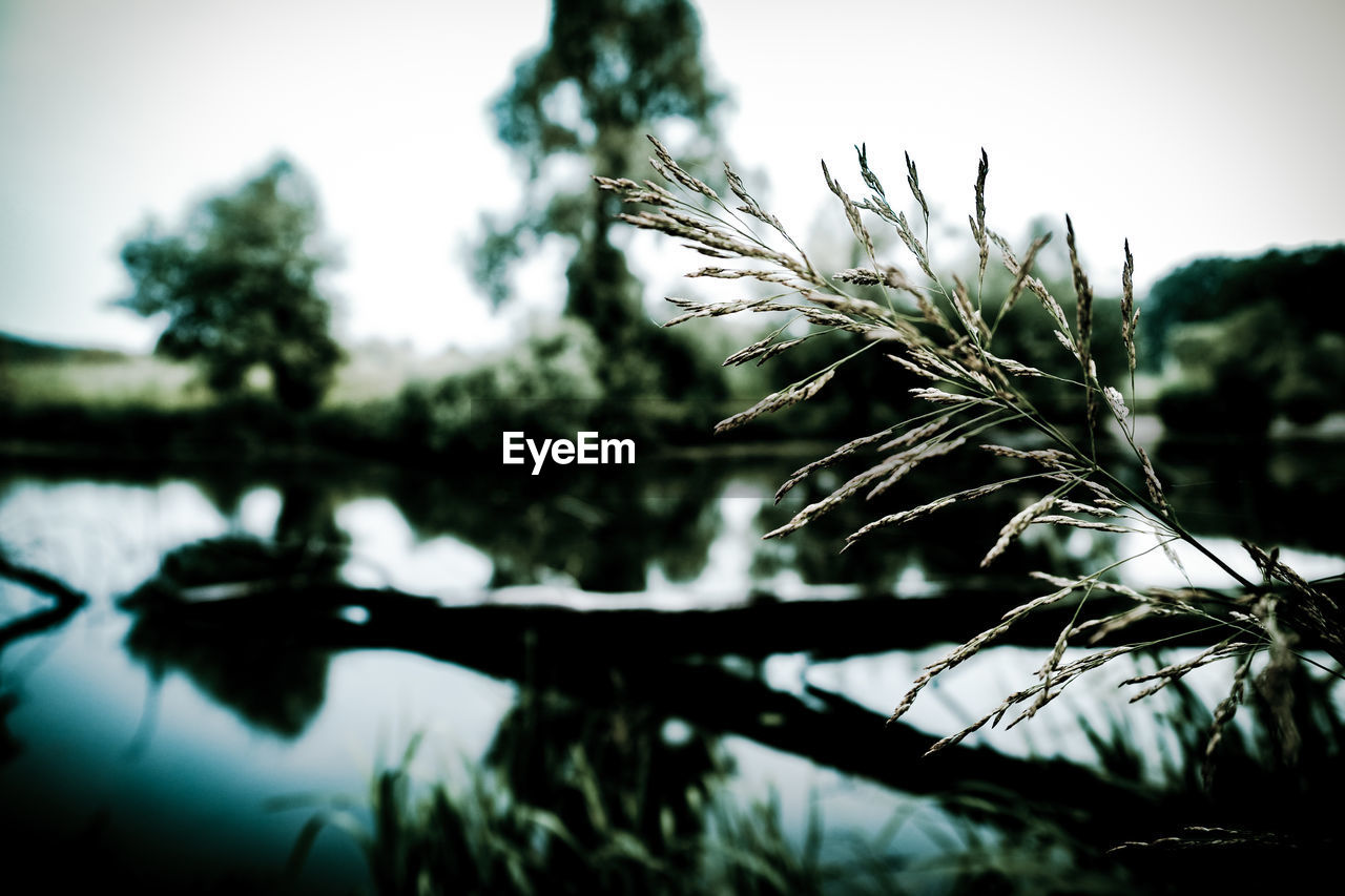 plant, growth, nature, close-up, tree, tranquility, selective focus, no people, sky, focus on foreground, beauty in nature, day, outdoors, water, lake, tranquil scene, scenics - nature, land, low angle view