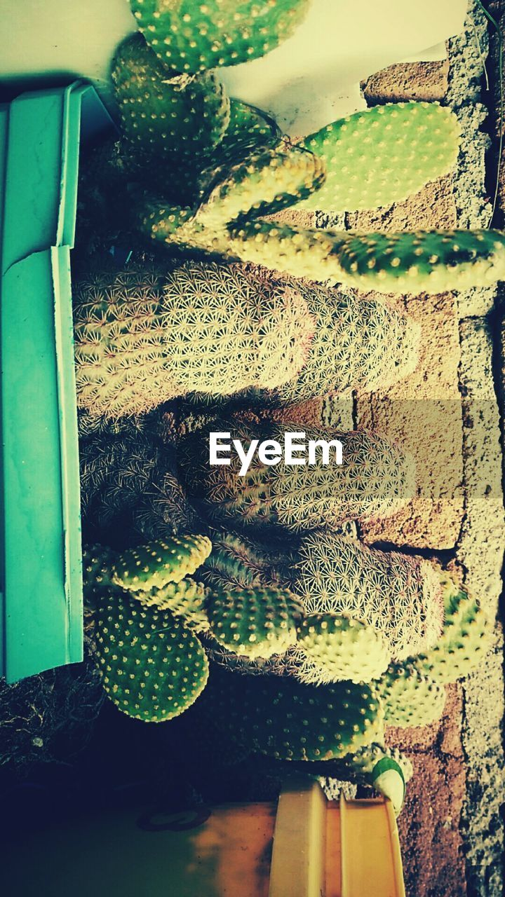 no people, indoors, day, close-up, reptile, animal themes, freshness