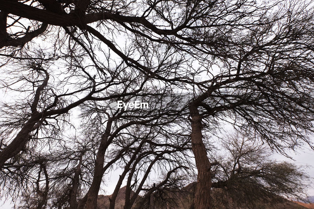 tree, branch, low angle view, nature, bare tree, beauty in nature, no people, tranquility, outdoors, day, growth, scenics, sky