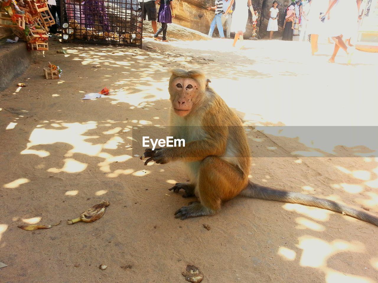 Portrait Of Monkey On Street