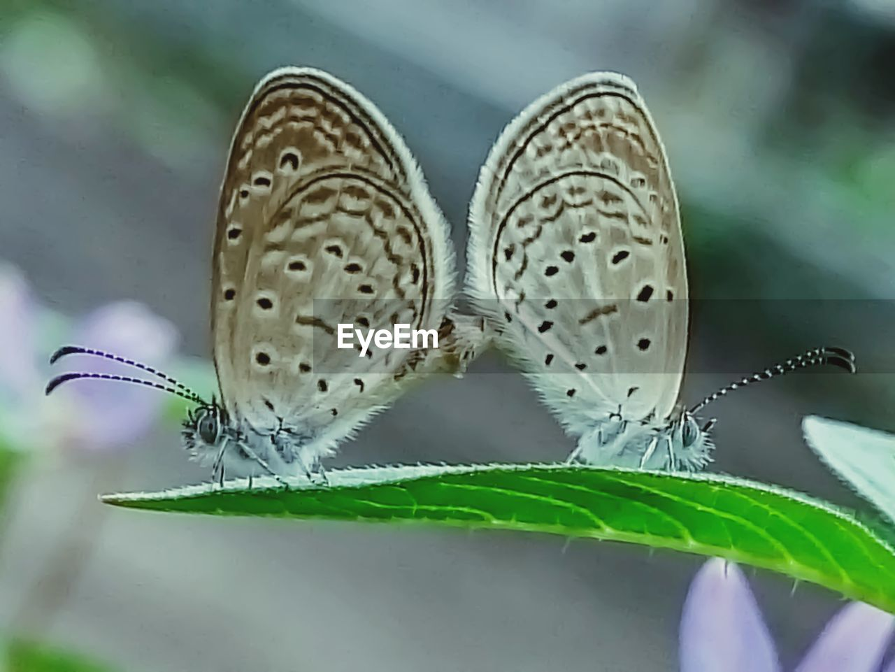 leaf, plant part, insect, butterfly - insect, close-up, invertebrate, animal wing, beauty in nature, nature, plant, animal themes, animals in the wild, animal wildlife, animal, flower, focus on foreground, growth, day, one animal, selective focus, no people, outdoors, butterfly