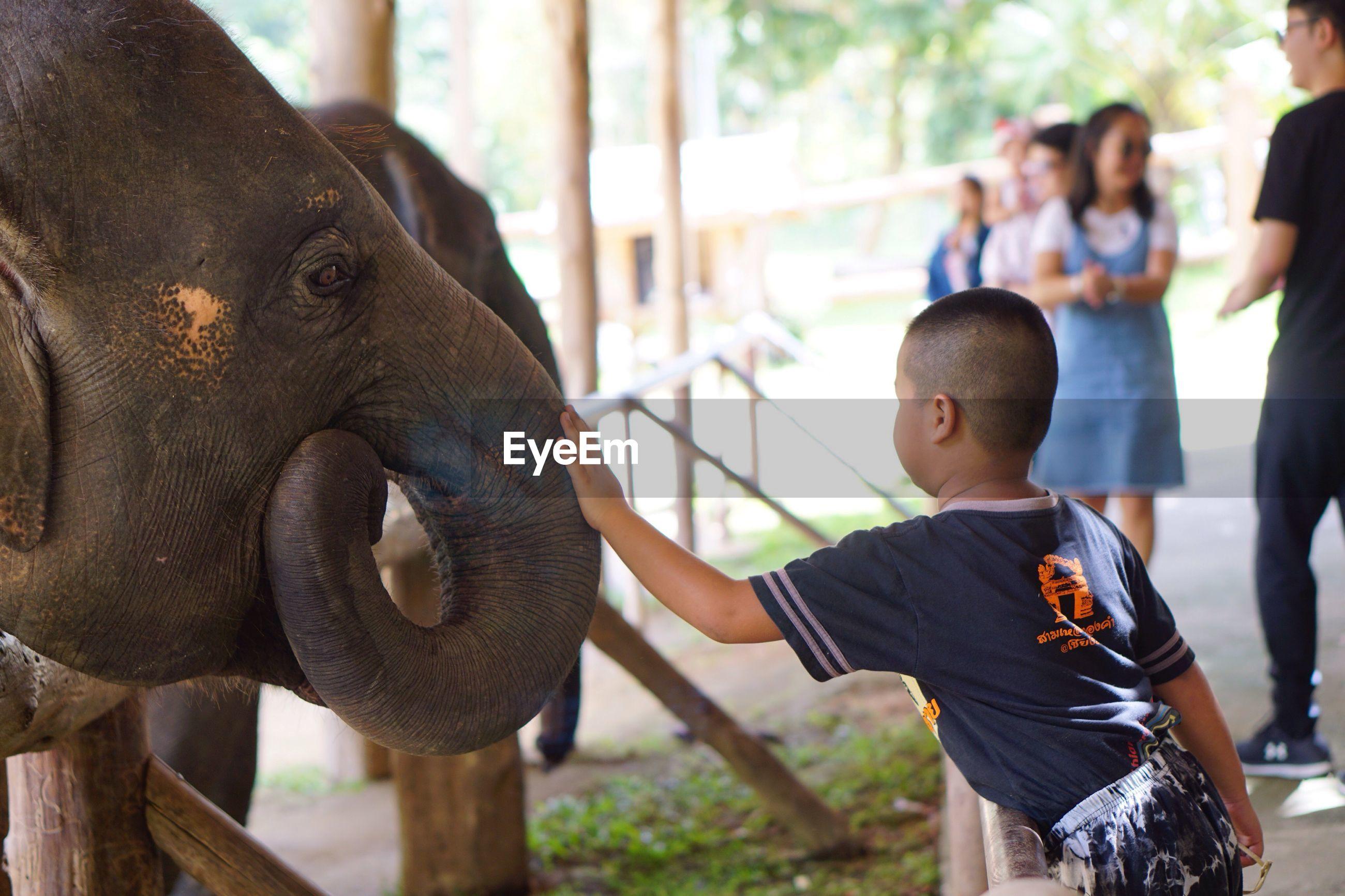 FULL LENGTH OF ELEPHANT