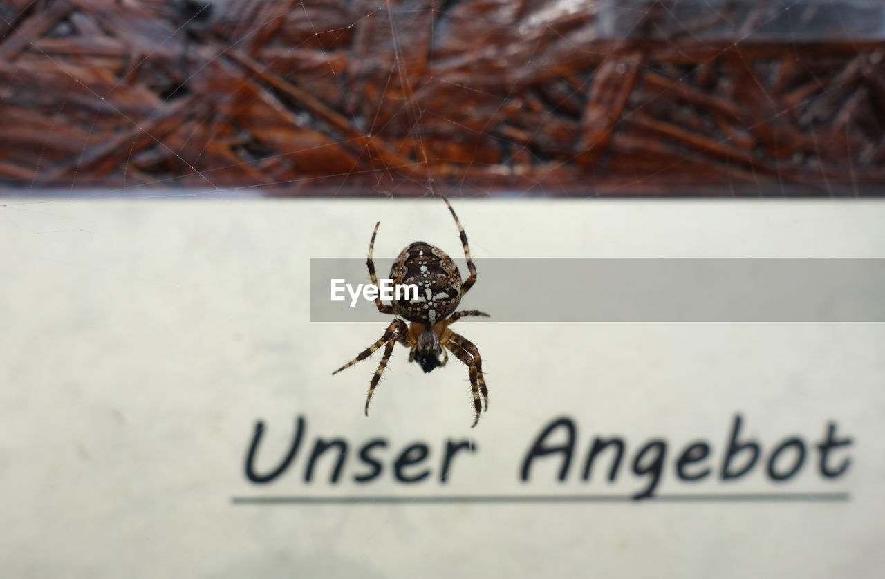 invertebrate, insect, animal wildlife, animal themes, close-up, one animal, animal, text, animals in the wild, arachnid, arthropod, spider, western script, no people, communication, nature, outdoors, selective focus, day