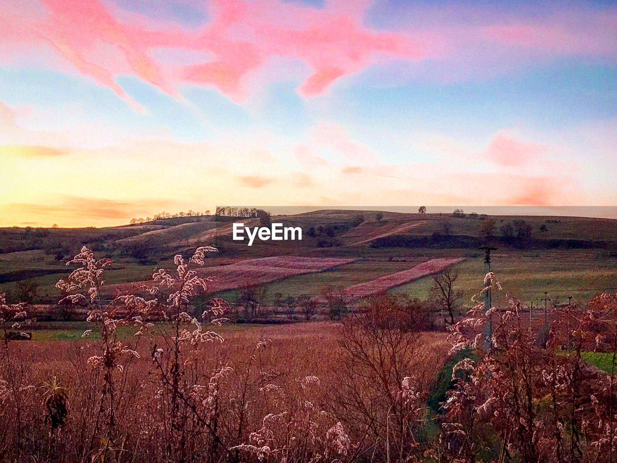 agriculture, sky, sunset, landscape, beauty in nature, scenics, farm, tranquil scene, nature, rural scene, field, outdoors, cloud - sky, tranquility, no people, day