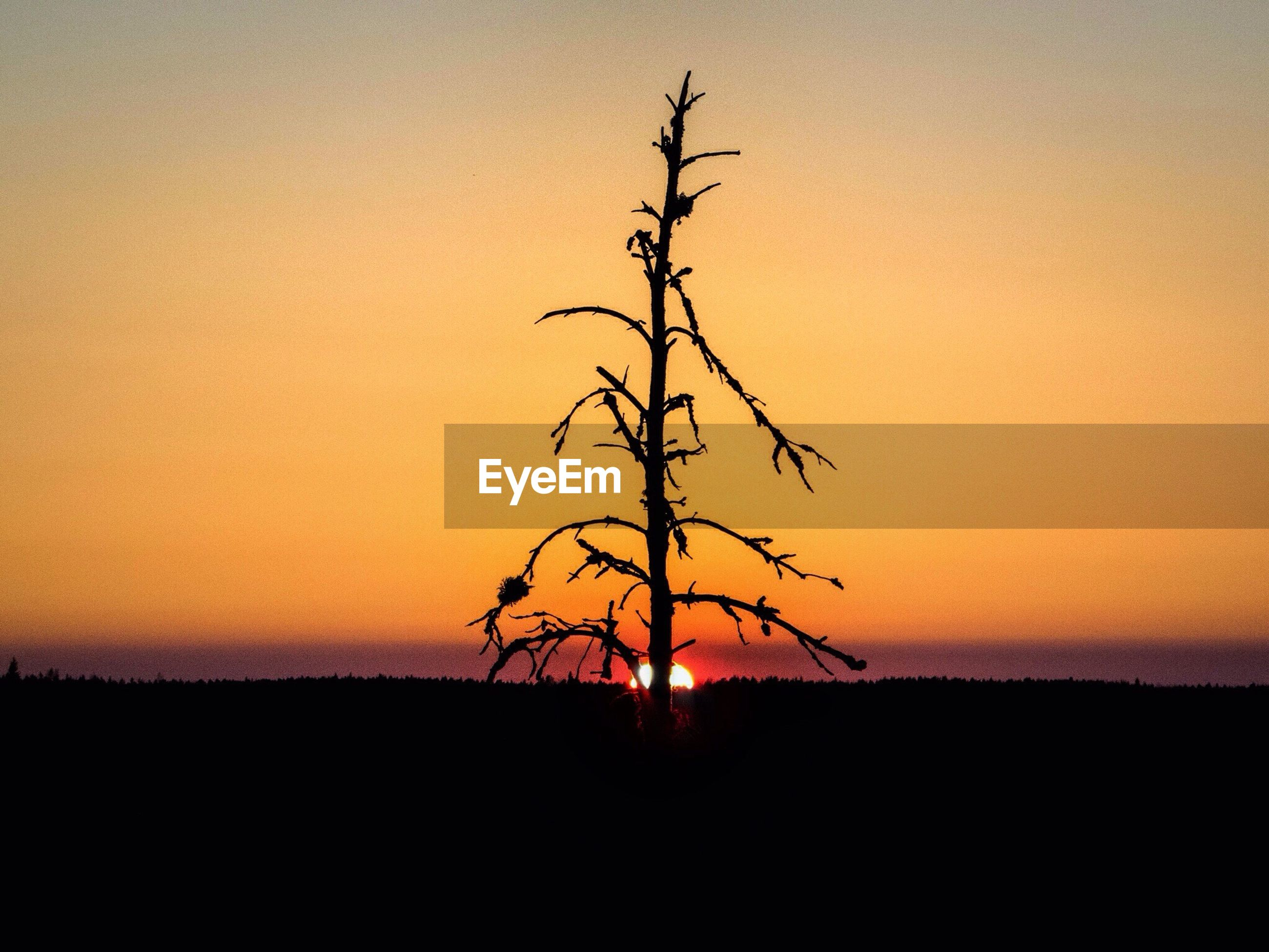 sunset, silhouette, tranquil scene, tranquility, scenics, beauty in nature, orange color, clear sky, bare tree, landscape, nature, copy space, idyllic, sun, branch, tree, horizon over land, sky, field, remote