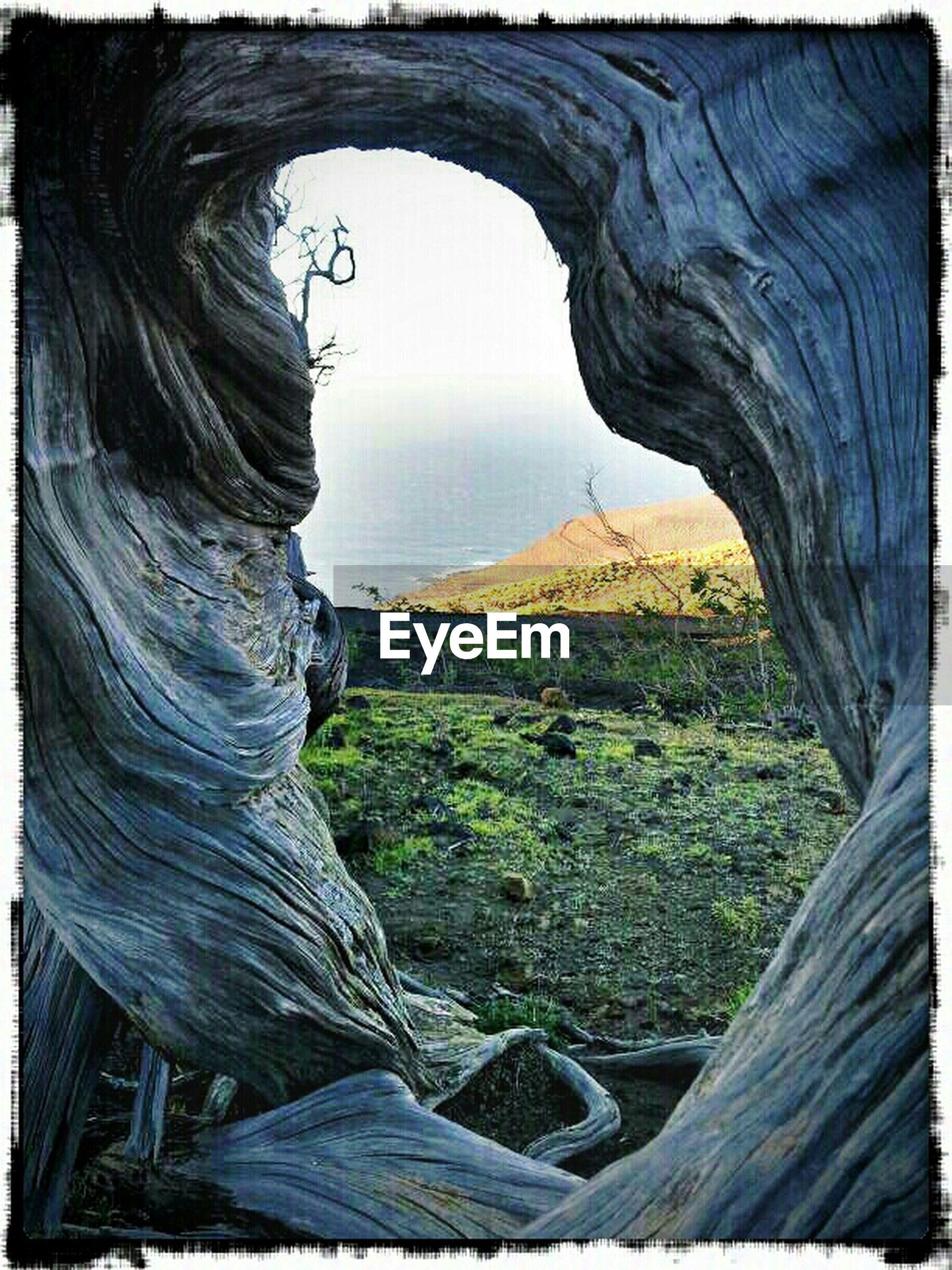 Landscape seen through sabina tree