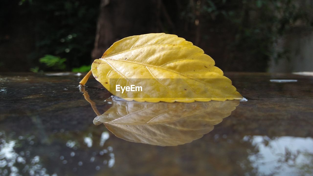 Close-Up Of Yellow Leaf On Dry Leaves