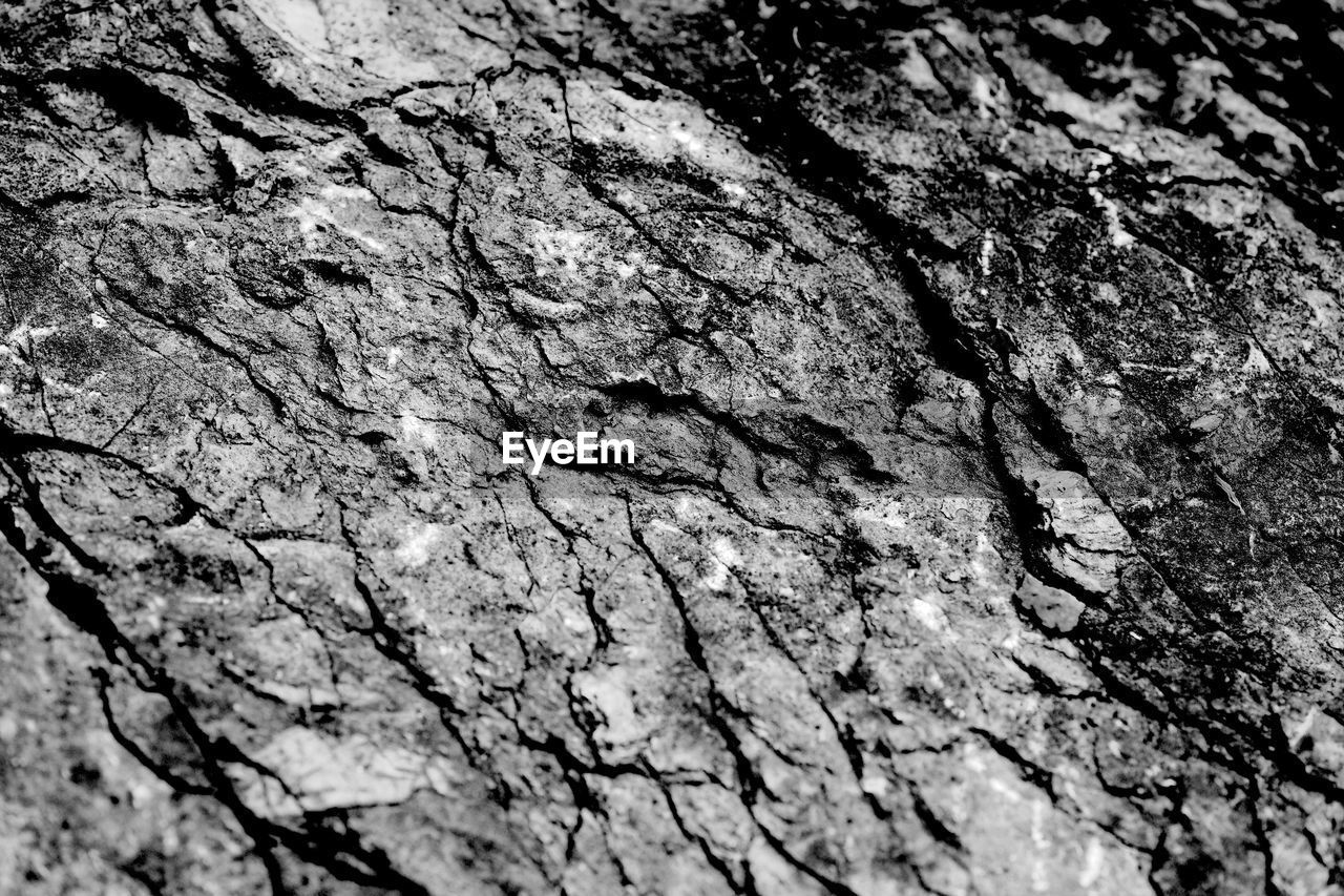textured, rough, cracked, tree trunk, backgrounds, no people, full frame, close-up, pattern, bark, day, outdoors, nature, tree