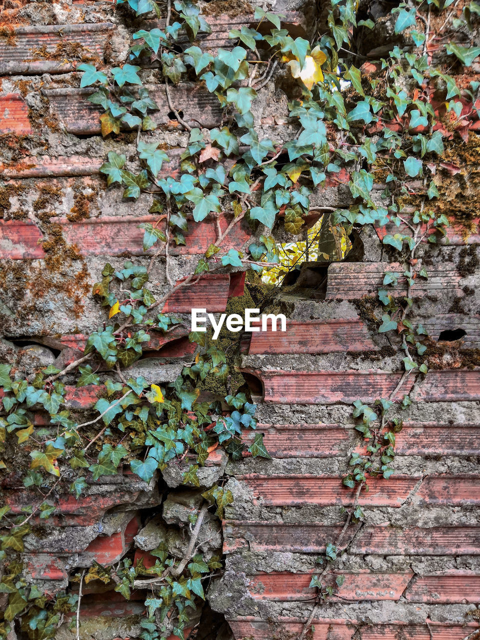 wall, brick wall, ivy, brick, built structure, wall - building feature, plant, architecture, day, no people, creeper plant, growth, plant part, leaf, weathered, nature, outdoors, building exterior, green color, old, deterioration, stone wall