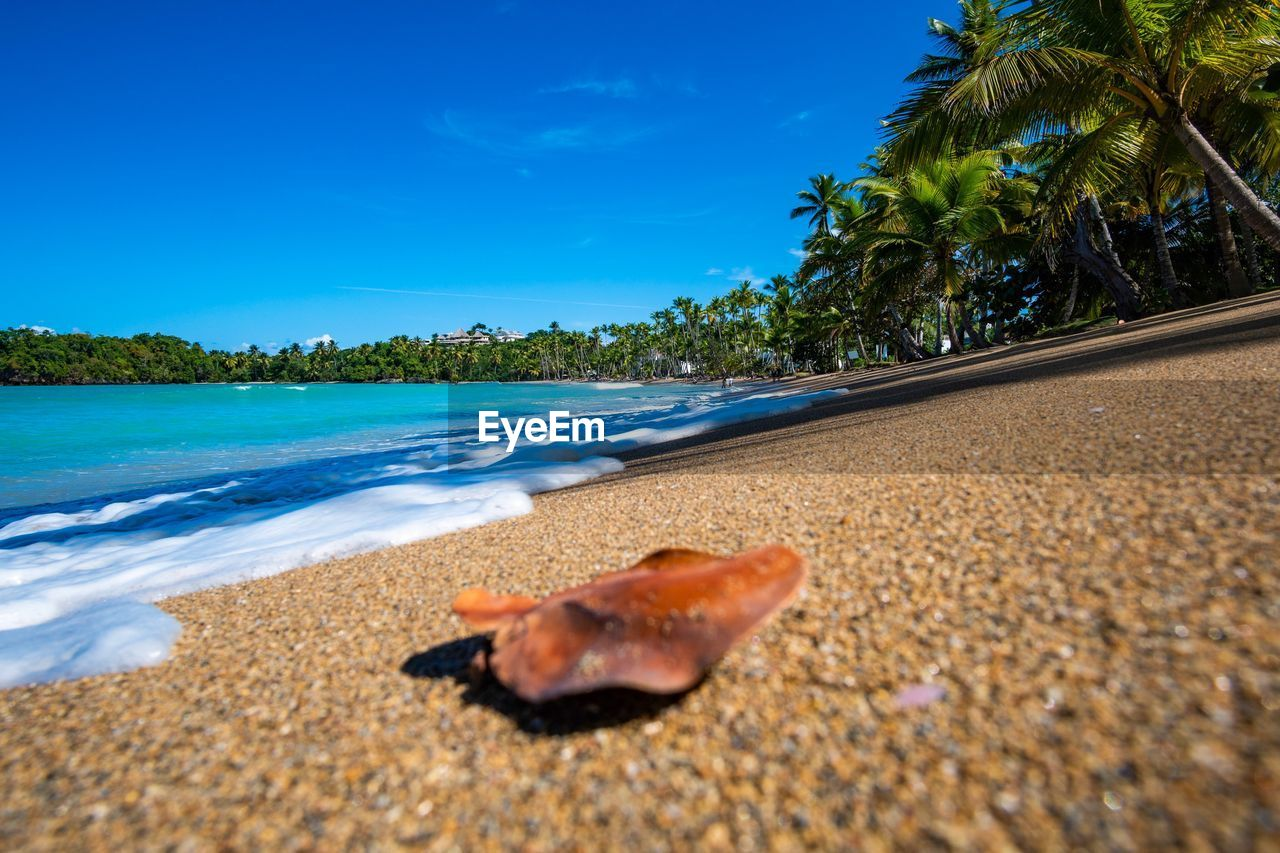 beach, tree, land, sky, sea, water, nature, sand, plant, animal, tropical climate, palm tree, no people, animal themes, scenics - nature, blue, beauty in nature, day, tranquil scene, outdoors, surface level, marine, coconut palm tree