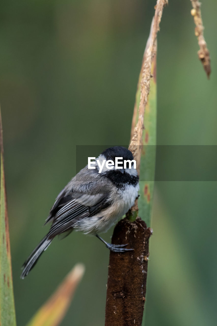 animal wildlife, animals in the wild, animal, animal themes, one animal, bird, vertebrate, perching, focus on foreground, close-up, no people, day, plant, nature, outdoors, great tit, wood - material, selective focus, beauty in nature, tree