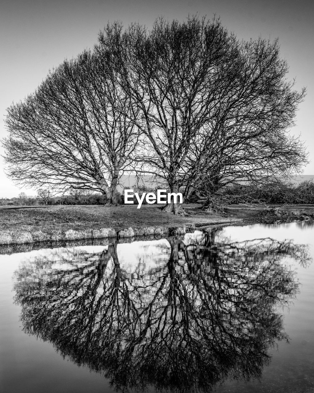 tree, water, tranquility, plant, bare tree, reflection, tranquil scene, lake, nature, scenics - nature, no people, beauty in nature, sky, day, waterfront, cold temperature, non-urban scene, landscape, winter, outdoors