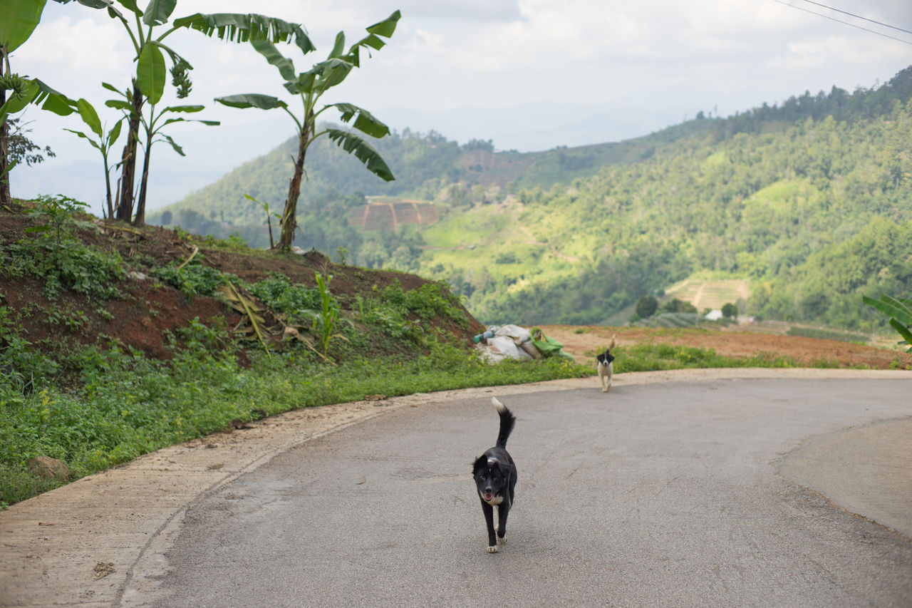 Dogs Walking On Road Against Mountain